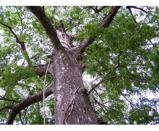Gli alberi ad alto fusto, anche se non mancano di interesse