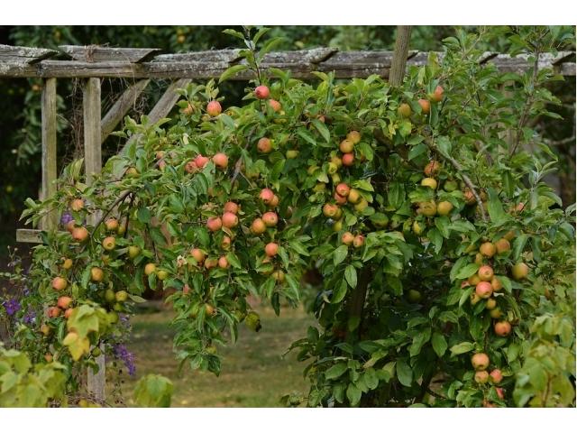 Piante da giardino sempreverdi interesting arbusti sempreverdi da giardino piante da giardino - Alberi da giardino a crescita rapida ...