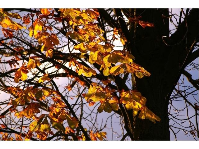 Alberi caducifoglie: caratteristiche ed elenco delle piante che perdono le foglie