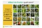 Alberi da frutto: quali sono? Specie, coltivazioni e prezzi
