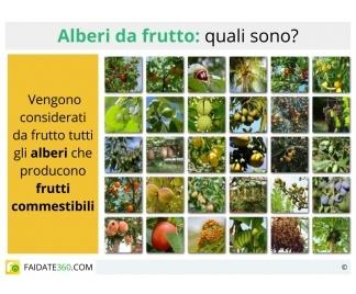 Alberi da frutto for Alberi da frutto