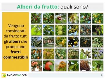 Fai da te for Elenco alberi da frutto