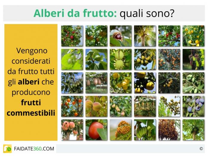 Alberi da frutto quali sono specie coltivazioni e prezzi for Alberi da frutto prezzi