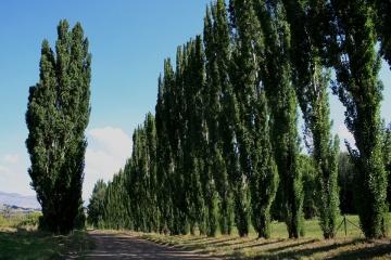 Fai da te - Prezzi alberi da giardino ...