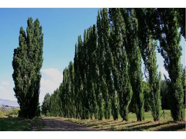 Piante alto fusto sempreverdi alberi ad alto fusto quali - Piante alto fusto da giardino ...