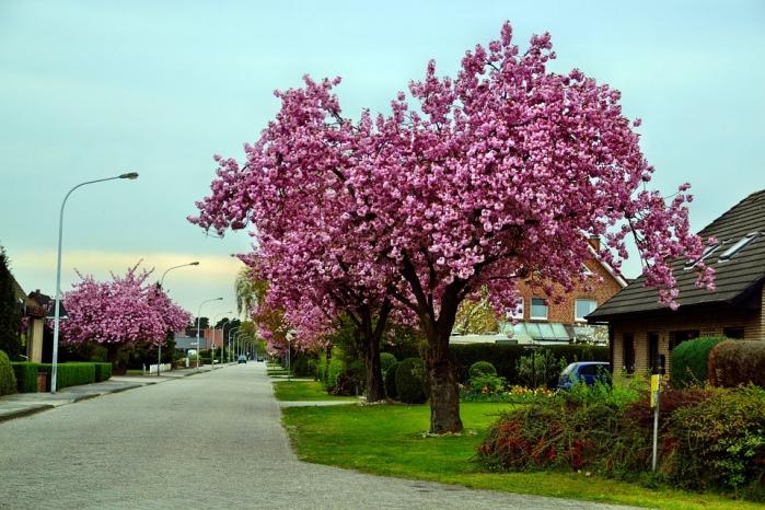 alberi ornamentali quali scegliere specie per interno ed
