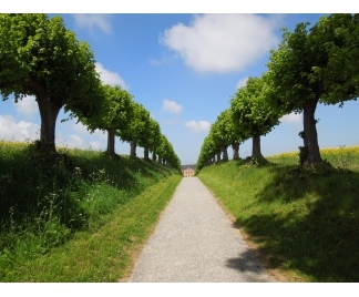 alberi per viali