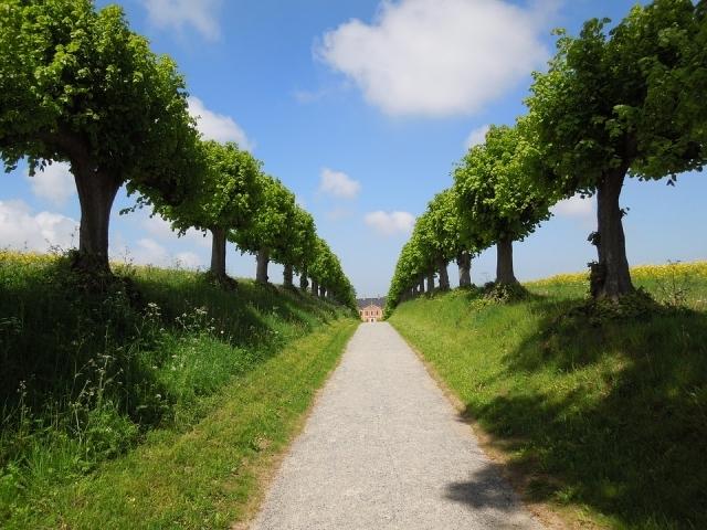 Alberi per viali quali quelli pi adatti tipi e for Gli alberi sempreverdi