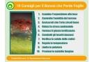 Bonsai for Ficus benjamin perde foglie