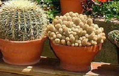 Coltivare cactus
