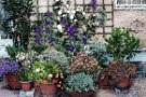 Coltivare in vaso le piante