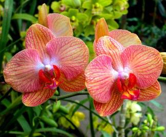 Orchidee Da Esterno.Concime Orchidee