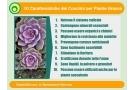 Concime piante grasse