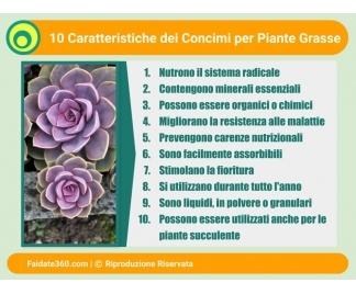 Concime piante grasse for Foto piante grasse particolari