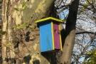 Costruire casetta per uccelli fai da te