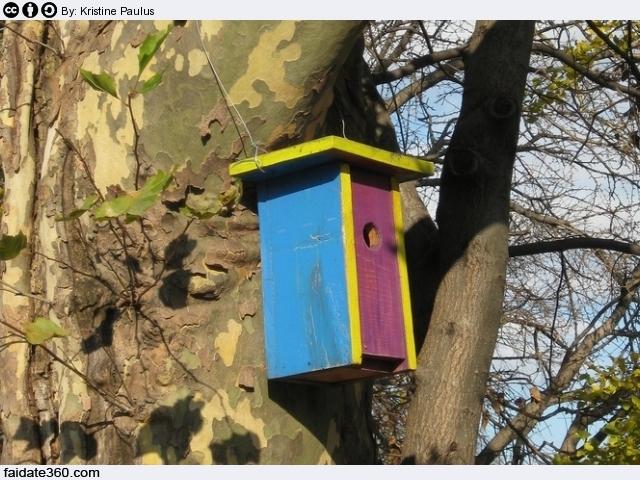 Costruire casetta per uccelli fai da te for Casette per conigli fai da te