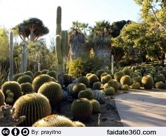 Giardini piante grasse