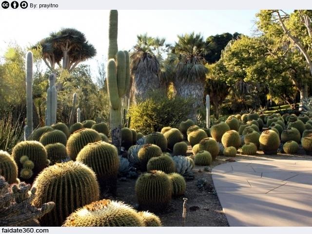 Giardini piante grasse for Piante grasse in giardino