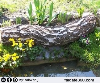 Pin giardini acquatici on pinterest - Laghetti da giardino ...