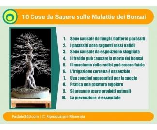 Malattie bonsai for Bonsai pianta