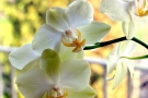 Manutenzione orchidee