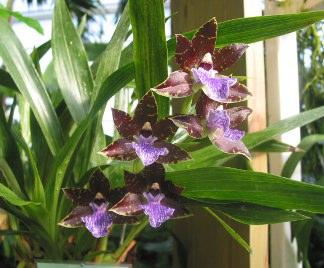 Orchidee in casa for Orchidee da esterno