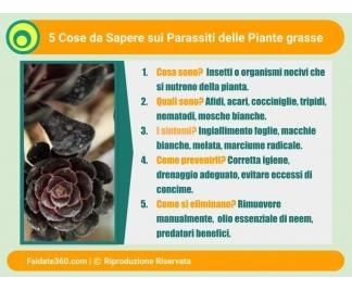 Parassiti piante grasse for Parassiti piante