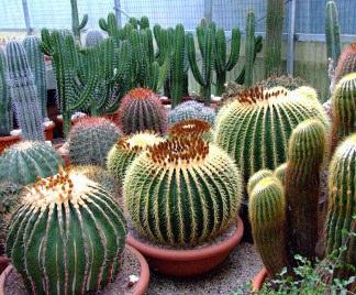 Piante grasse succulente for Piante grasse pendenti