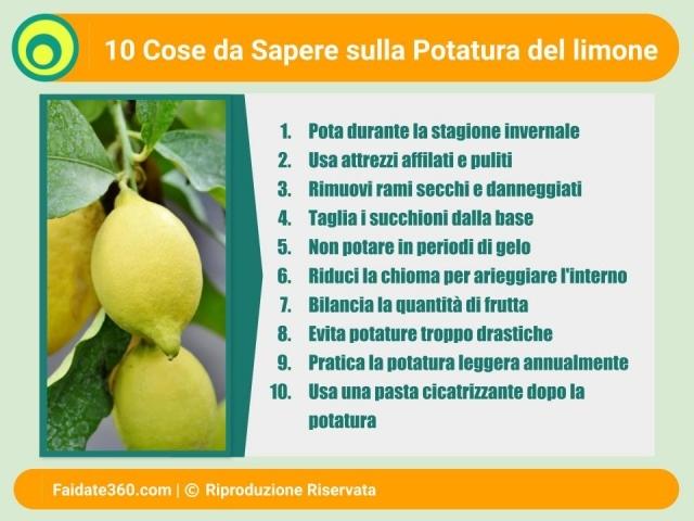 Potare il limone for Potatura limoni in vaso