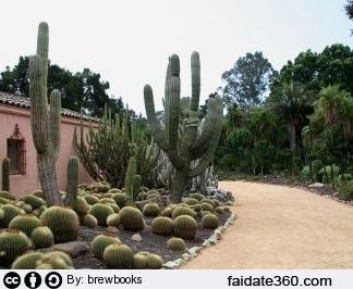Potatura piante grasse