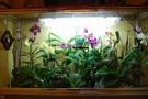 Serre orchidee