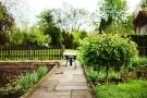 Alberi da giardino: tipi, nomi e prezzi