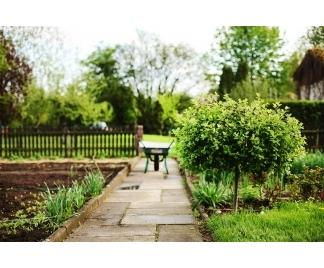 Alberi da giardino for Foto alberi da giardino