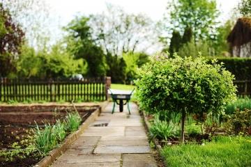 Fai da te for Foto alberi da giardino