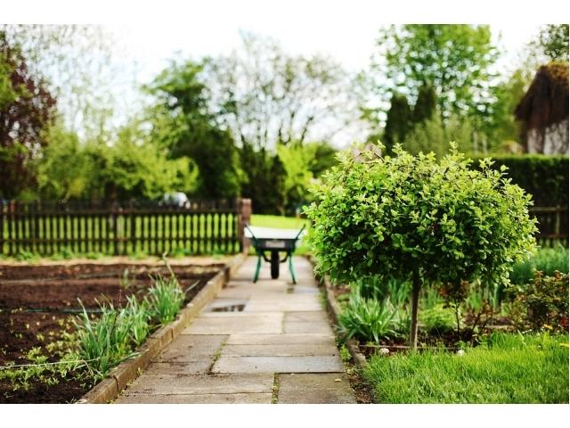 Alberi da giardino tipi nomi e prezzi - Alberi da piantare in giardino ...