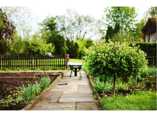 Alberi da giardino tipi nomi e prezzi - Alberi sempreverdi da giardino ...
