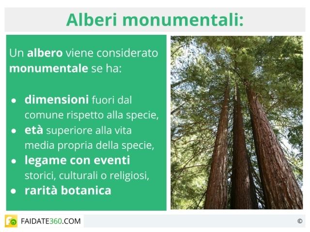 Alberi monumentali, secolari e millenari in Italia e nel mondo