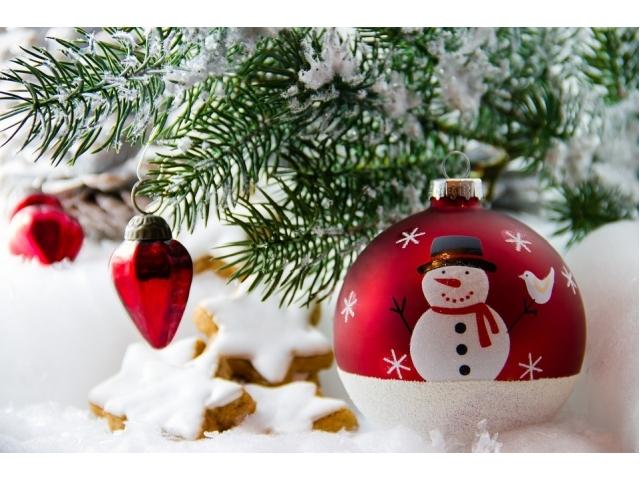 Albero di Natale vero: cura  e coltivazione dell'abete in vaso