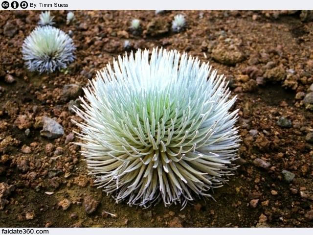 Piante grasse rare for Foto piante grasse particolari