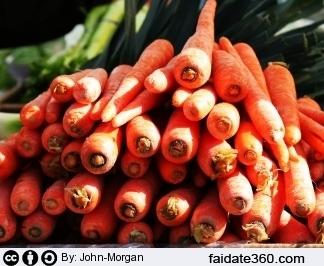 Coltivare carote