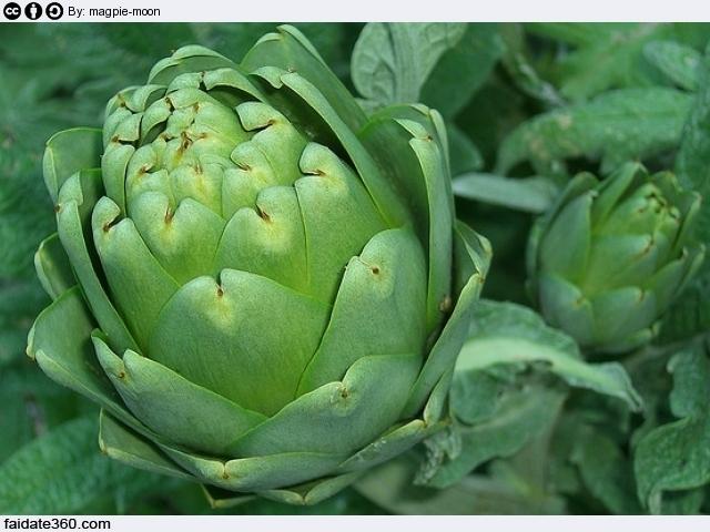coltivazione carciofi