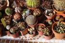 coltivazione piante grasse