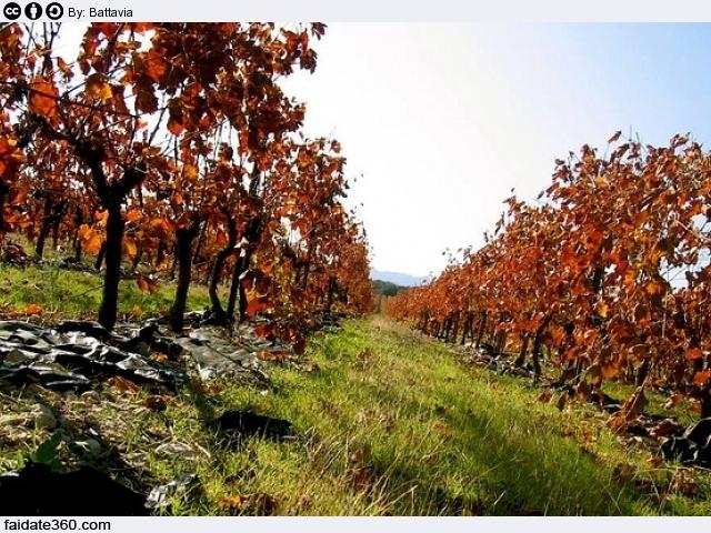 Produzione Piante Da Frutto : Concimazione piante da frutto