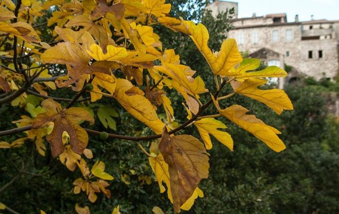 Alberi caducifoglie caratteristiche ed elenco delle for Elenco piante sempreverdi