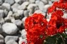 Fioriera in muratura per terrazzo o giardino: materiali e realizzazione fai da te