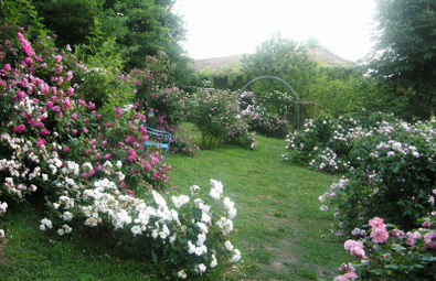 Progettazione giardini for Giardini case moderne