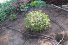 Irrigazione giardino: sistemi ed impianti fai da te