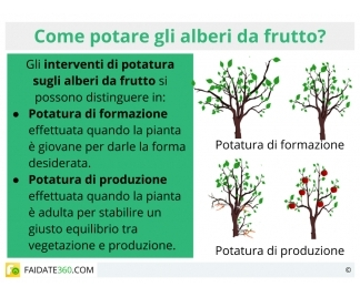 Potatura alberi da frutto