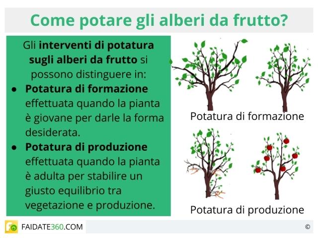 Potatura alberi da frutto quando farla tecniche e calendario for Potatura alberi da frutto