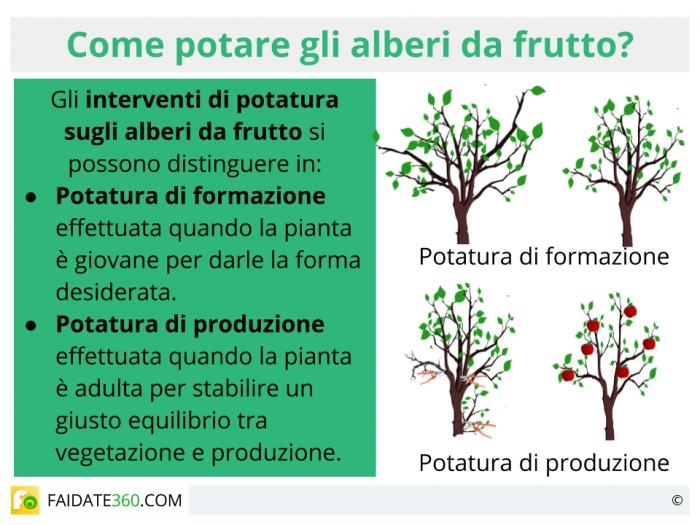 Potatura alberi da frutto quando farla tecniche e calendario for Quando piantare alberi da frutto